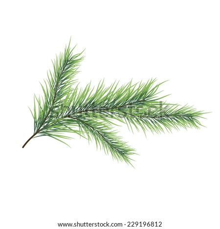Vector illustration of christmas tree branch