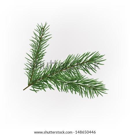 Vector illustration of christmas tree branche - stock vector