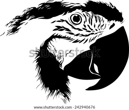 vector illustration of  close-up black and white parrots head isolated on white background - stock vector