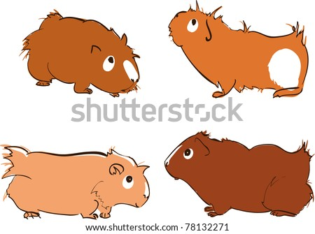 Guinea Pig Isolated Stock Vectors, Images & Vector Art | Shutterstock