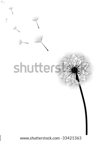Vector illustration of dandelion with flying seeds isolated on white background - stock vector
