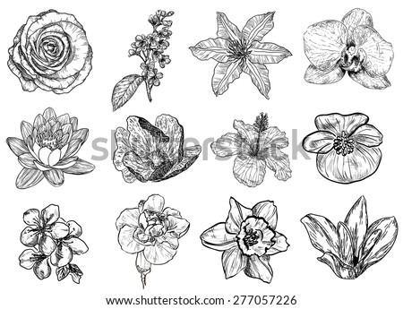 Vector illustration of flowers in sketch style: rose, bird cherry tree, lilac, clematis, orchid, lily, water-lily, lotus, hibiscus, violet, apricot, almond, cherry, carnation, narcissus, magnolia - stock vector