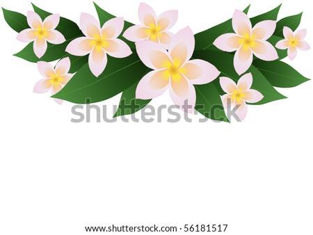 Vector illustration of frangipani plumeria border - stock vector