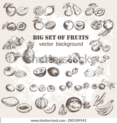 Vector illustration of fruits collection in vintage style - stock vector