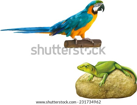 Vector illustration of Green lizard on a stone, Chinese water dragon, Colorful blue parrot macaw isolated on white background - stock vector