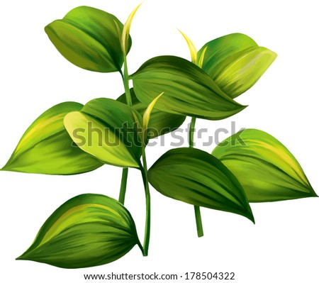 Vector illustration of green tropical leaves. Young plant. - stock vector