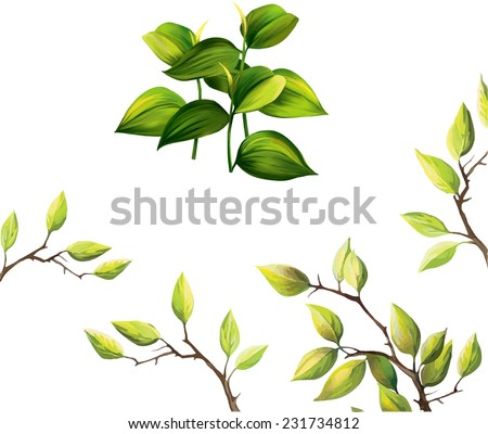 Vector illustration of green tropical leaves. Young plant. cherry tree green leaves isolated on white background - stock vector