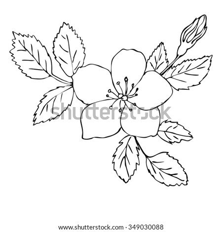 Vector Illustration Hand Drawn Dog Rose 349030088