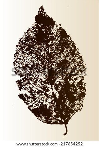 Vector illustration of leaf veins, leaf skeleton isolated. Autumn.  - stock vector