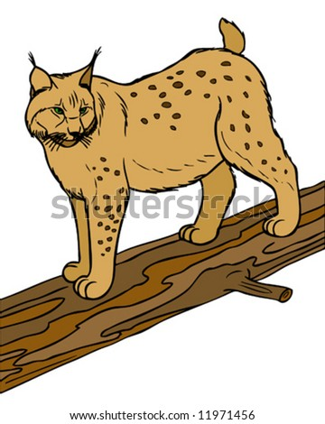 vector illustration of lynx - stock vector