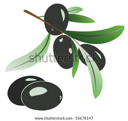 Vector illustration of olive branch with black olives on white - stock vector