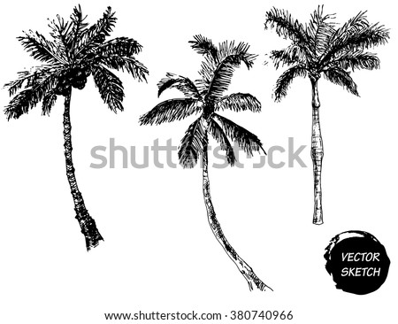 Vector Illustration of Palm Tree Sketch for Design, Website, Background, Banner. Hand Drawing Floral on Beach. Travel and Vacation Ink Element Template. Isolated on White - stock vector