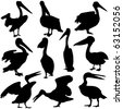vector illustration of pelican silhouettes - stock