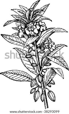 Vector illustration of plant