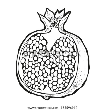 Vector illustration of pomegranate isolated on a white background - stock vector