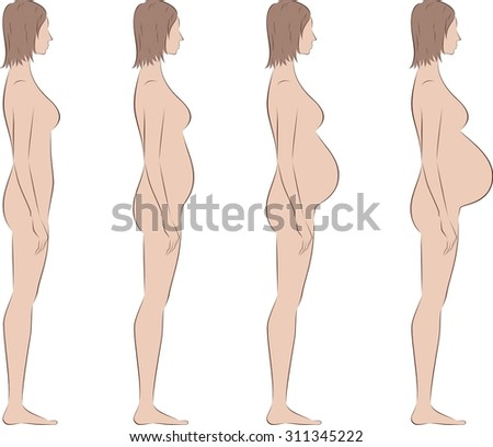 Vector illustration of pregnant female silhouette. Change in proportions from the first trimester till birth. Side view