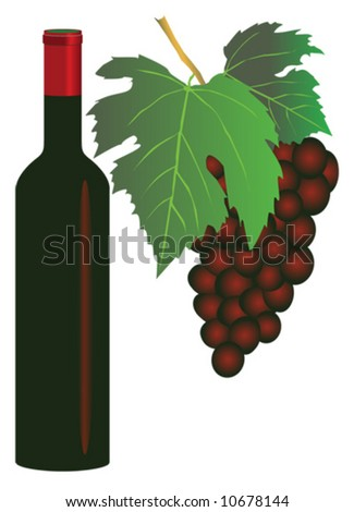Vector illustration of red grapes and a bottle of red wine - stock vector