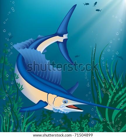 Vector illustration of swimming marlin - stock vector