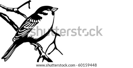 vector illustration of the bird on white background - stock vector
