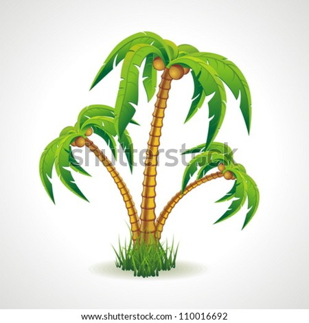 Vector illustration of the palm trees width coconuts. - stock vector