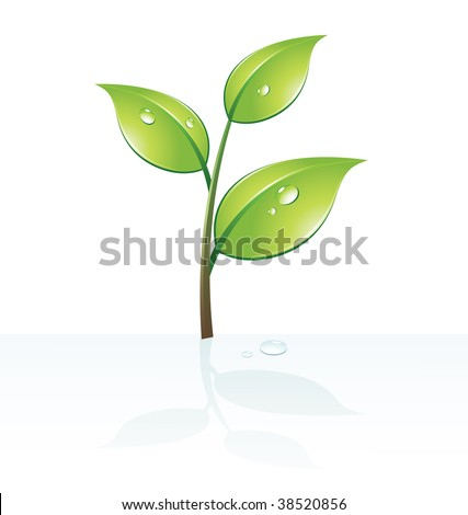 Vector illustration of three stylized leaves