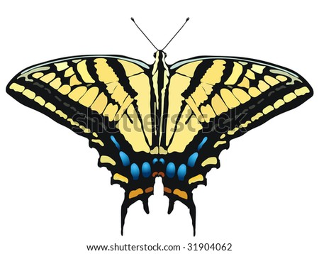Tiger swallowtail butterfly coloring page - photo#25