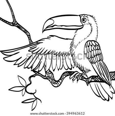Bird Coloring Book Isolated On White Stock Vector 691565161 ...