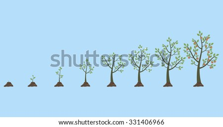 Vector illustration of tree growth isolated on white - stock vector