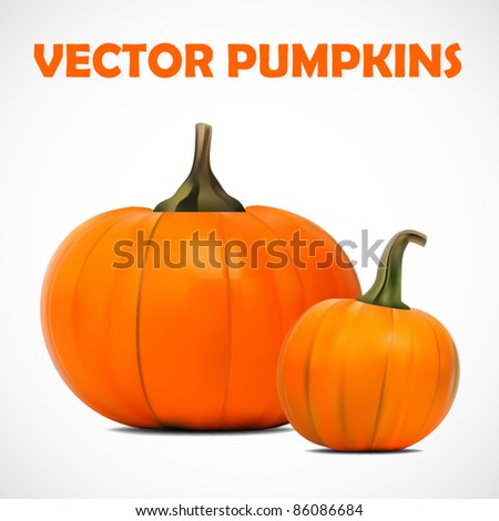 vector illustration of two beautiful pumpkins - stock vector