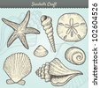 Vector Illustration of various sea shells doodled in a vintage style. Includes conch shell, spiral, clam, sand dollar, sea star, and others. Tropical beach clip-art. Eps10 - stock photo