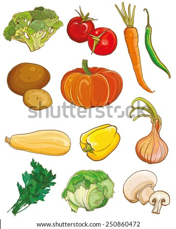 Vector illustration of vegetables: broccoli, tomatoes, carrots, chili, potatoes, pumpkin, squash, bell pepper, onion, parsley, cabbage, mushrooms. Food ingredients set. eps 10 - stock vector