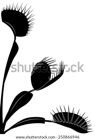 vector illustration of Venus flytrap in black and white colors - stock vector