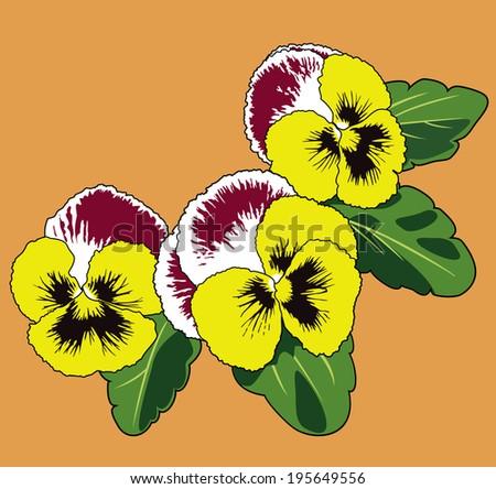 Vector illustration of Viola tricolor flower - stock vector