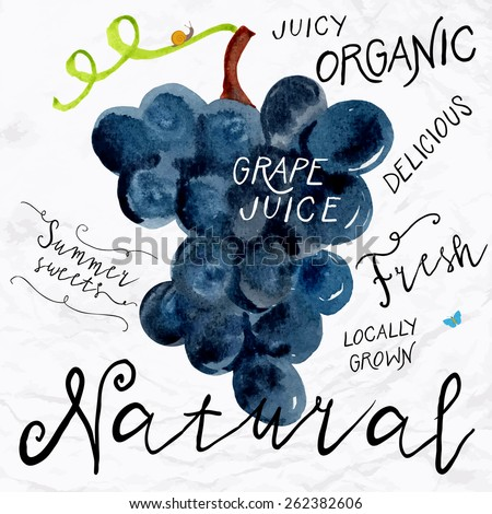 Vector illustration of watercolor grapes, hand drawn in 1950s or 1960s style. Concept for farmers market, organic food, natural product design, wine package, herbal tea, grape seed water or oil - stock vector