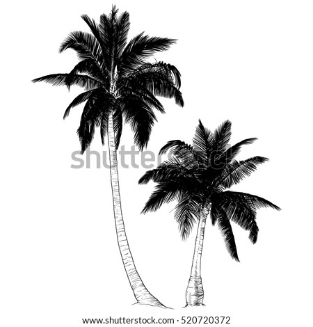 Vector illustration on a graphic tablet. Hand drawing.Set of silhouette of palm trees.