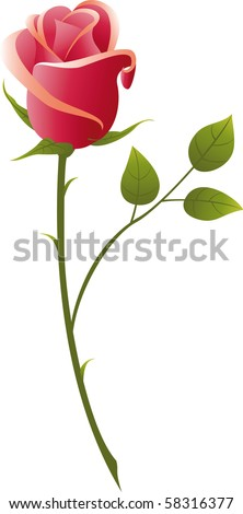 vector illustration red rose on a white background.. - stock vector