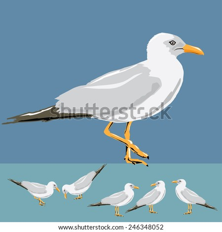 Vector illustration set of seagulls on background.  - stock vector