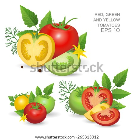 Vector illustration. Set of variegated ripe fresh realistic tomatoes composition with leaves, blossom and dill isolated on white background - stock vector