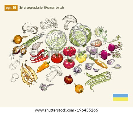 Vector illustration set of vegetables for Ukrainian borsch - stock vector