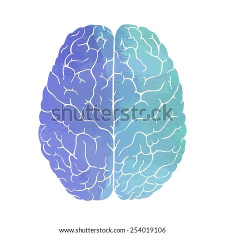 vector illustration watercolor brain - stock vector