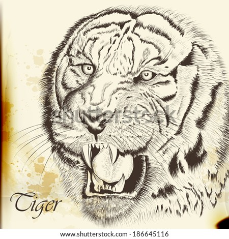 Vector illustration with hand drawn portrait of tiger