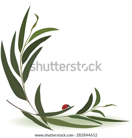 vector illustration with ladybird and eucalyptus - stock vector