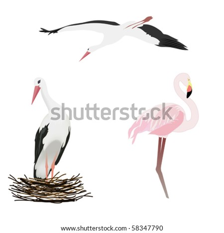 vector illustration with storks and flamingo