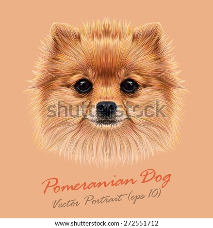 Amazing Pom Canine Adorable Dog - stock-vector-vector-illustrative-portrait-of-pom-pom-cute-head-of-a-sable-pomeranian-spitz-dog-272551712  Perfect Image Reference_738767  .jpg