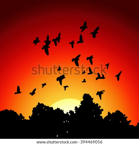 Vector image from black silhouettes of a flock of doves (Columba livia) flying over the trees on sunset background. - stock vector