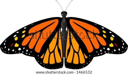 Vector image of a beautiful Monarch butterfly. - stock vector