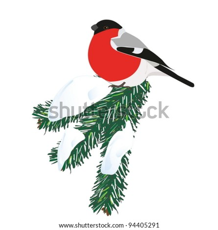 Vector image of a bullfinch on a snowy spruce branch. - stock vector
