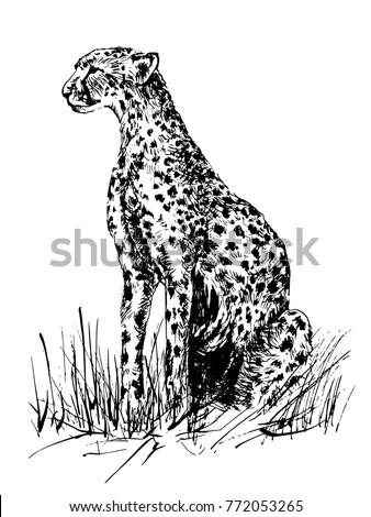 Grass Outline Vector Vector Image Cheetah S...