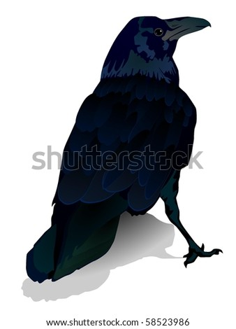 vector image of a crow - stock vector