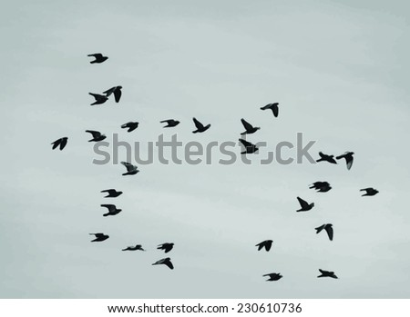 vector image of a flock of birds - stock vector